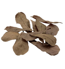 FLUVAL Fluval Betta Tropical Almond Leaves - 10 pack