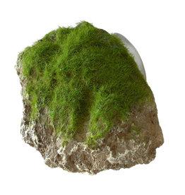 AQUA DELLA (D) Aqua Della - Moss Stone with Suction Cup - Small