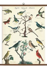 Cavallini Papers Cavallini Papers Bird School Chart