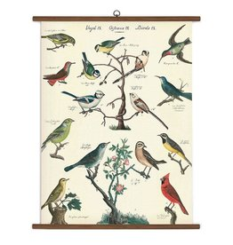 Cavallini Papers Bird School Chart