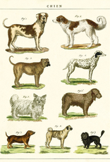 Cavallini Papers Cavallini Papers Dog Chart Wrap
