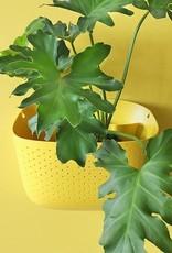 Wally Gro Wally Gro Wall Planter - Sunflower
