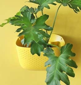 Wally Gro Wall Planter - Sunflower
