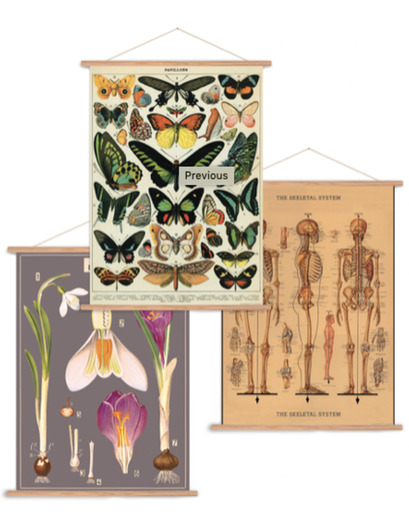 Cavallini Papers Cavallini Papers Vertical Poster Kit