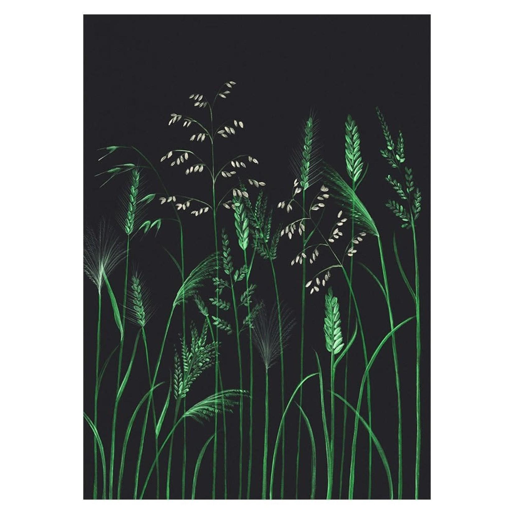 Stengun Drawings Carte Stengun - RHS CHELSEA GRASSES