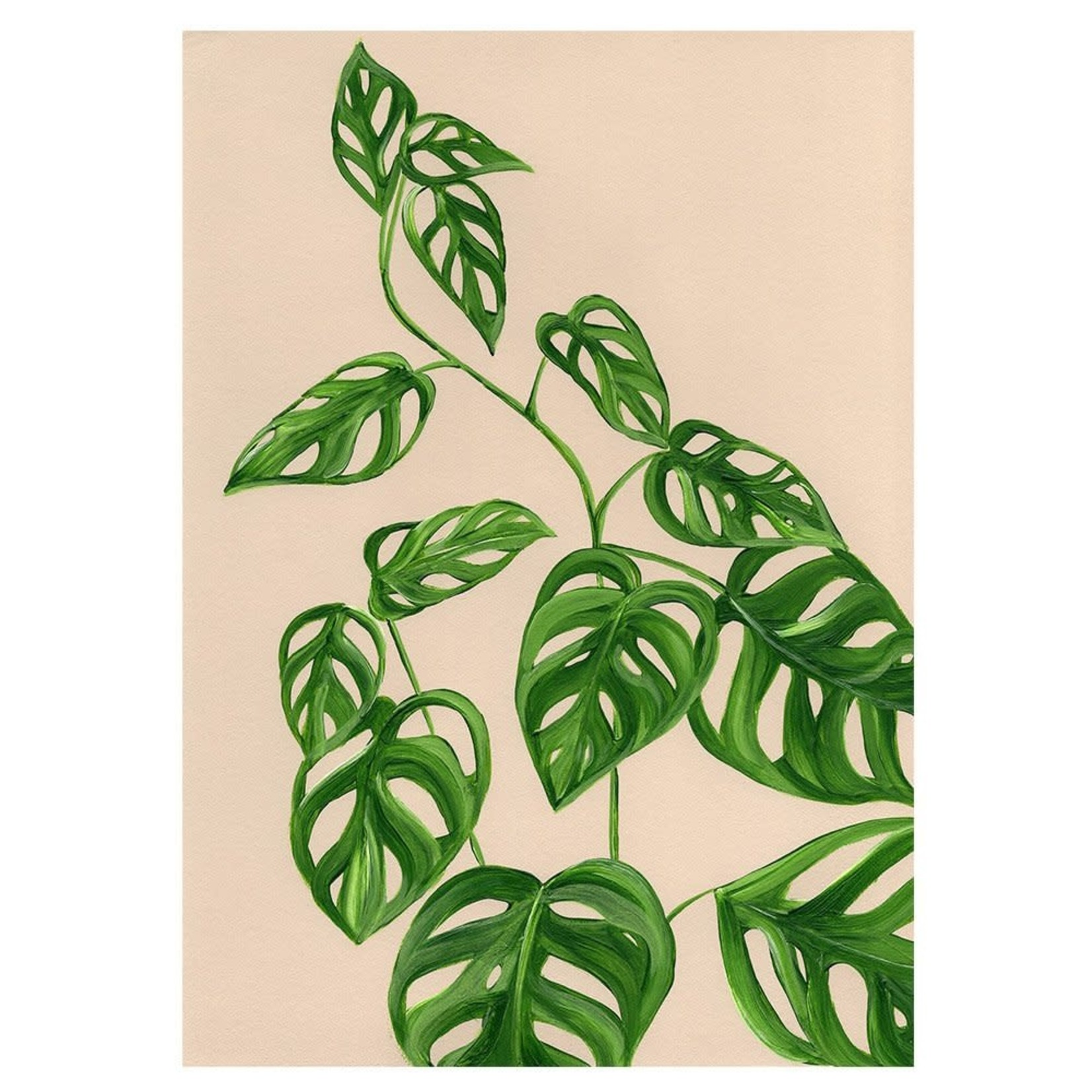 Carte Stengun - GREENHOUSE MONSTERA