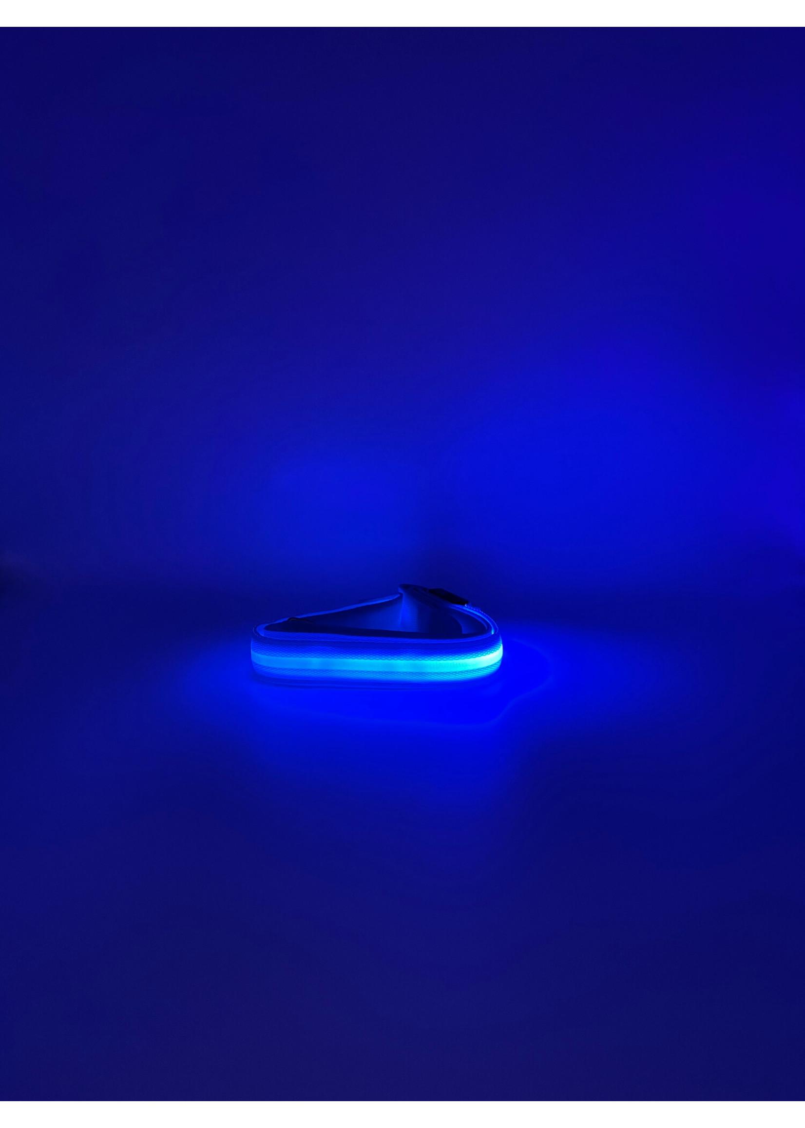 LED Pet Leash