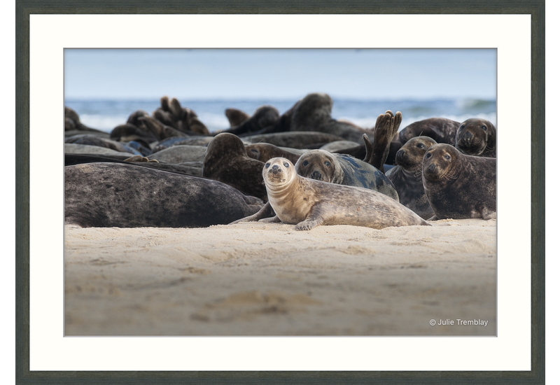 Female Seal