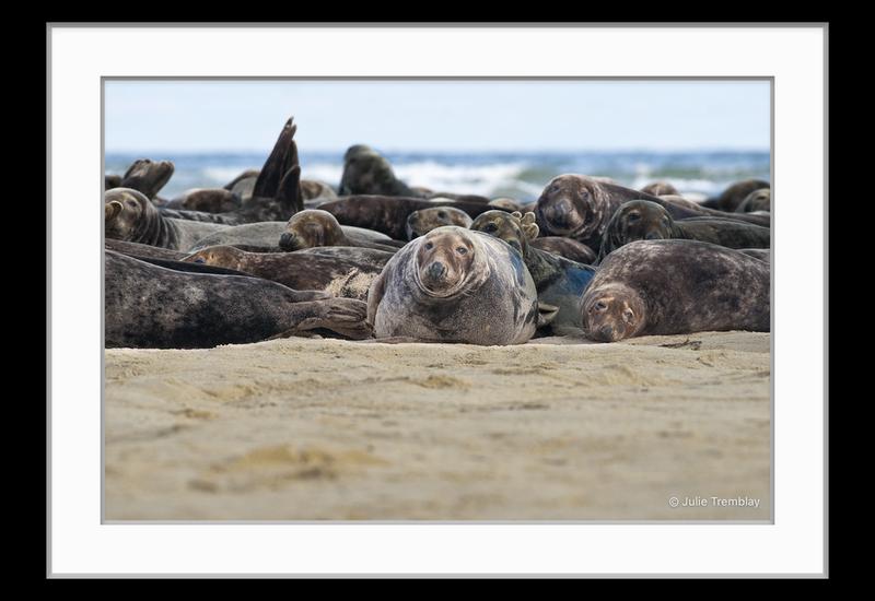 Prints Seal Group 1