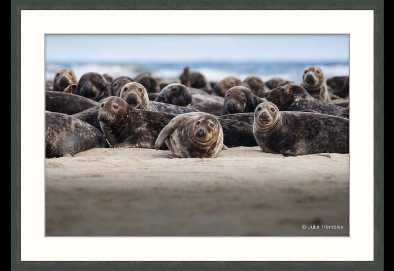 Seal Group 2