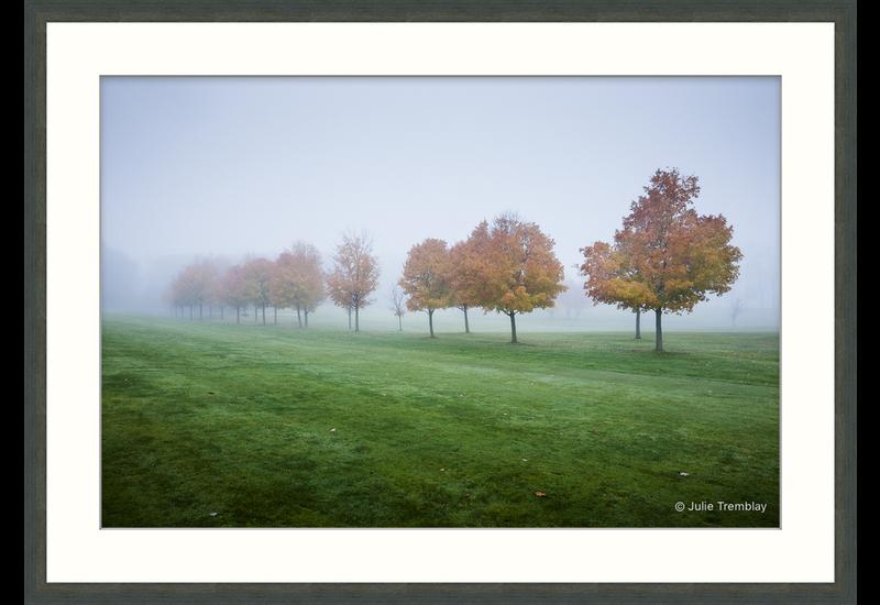 Fall Trees