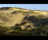 Morning Dunes