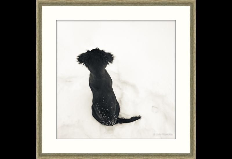 Sadie Pup