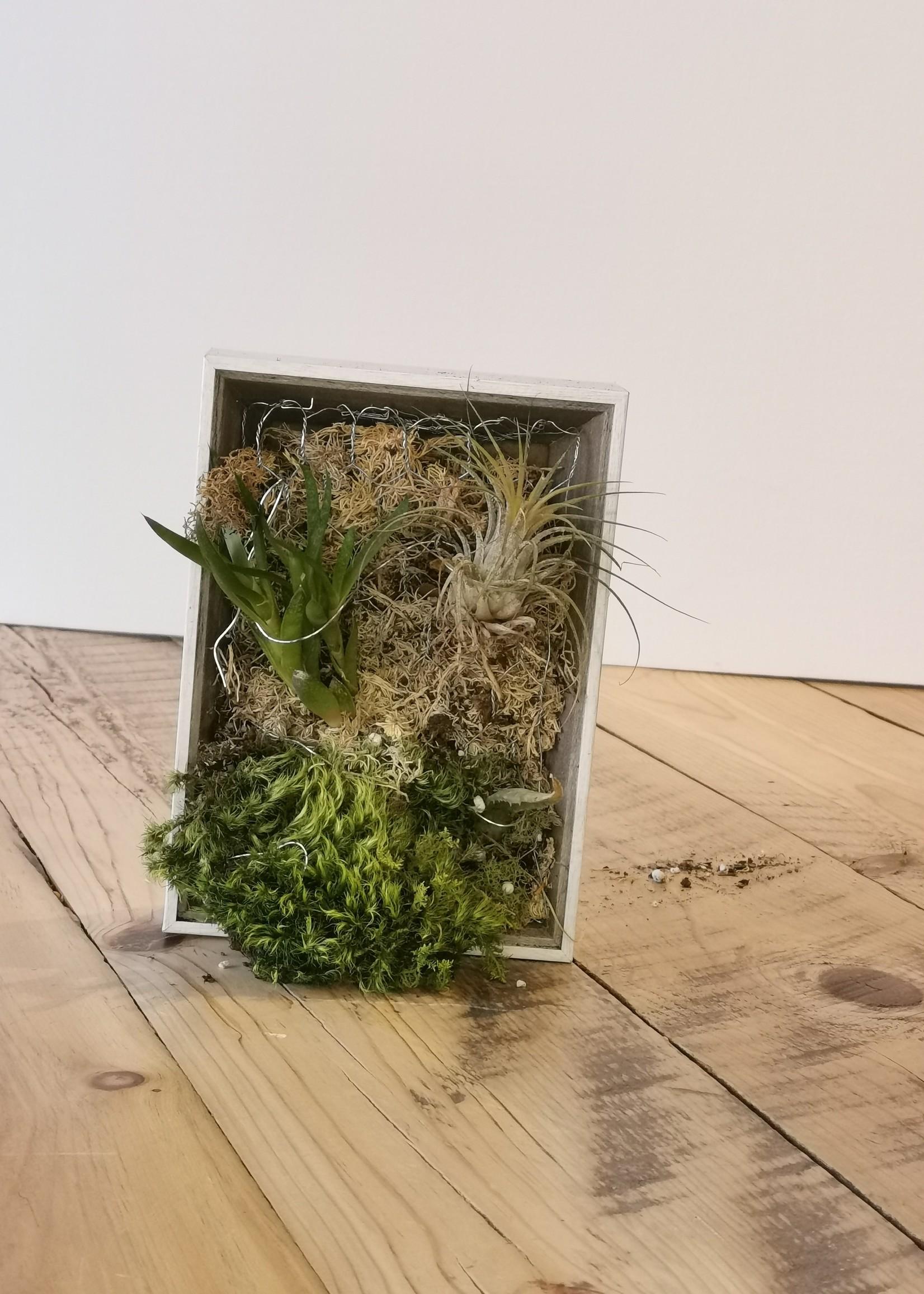 Richard Landry Cadre végétal - petit