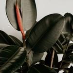 Plants & vegetal art