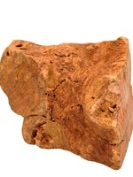 Little Loyals Little Loyals - Heather Tree Root Dog Chew - L