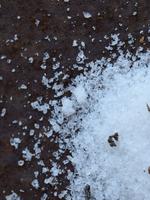 Olive Us Black Truffle Gourmet Sea Salt