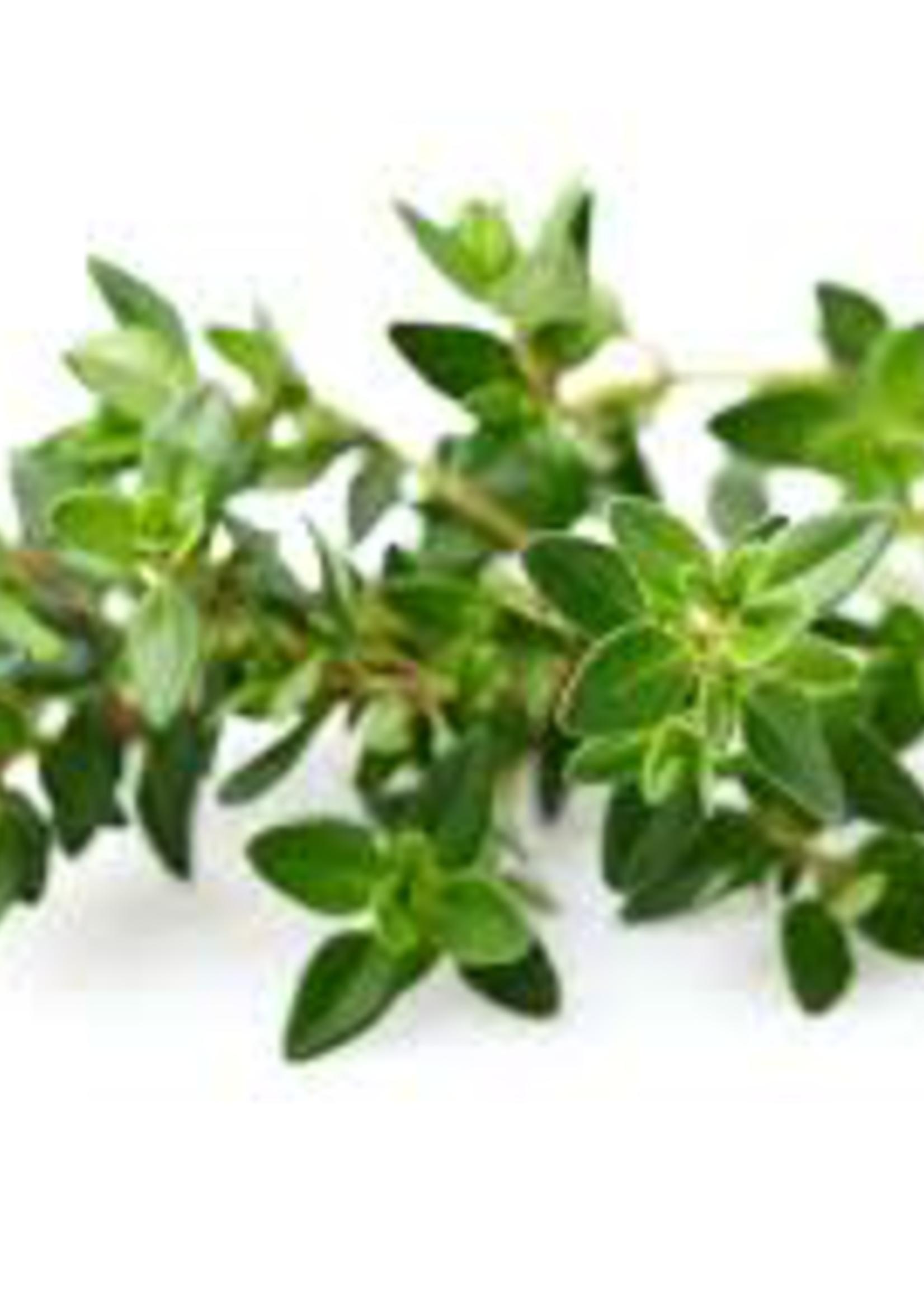Olive Us Fused Greek Sage Olive Oil