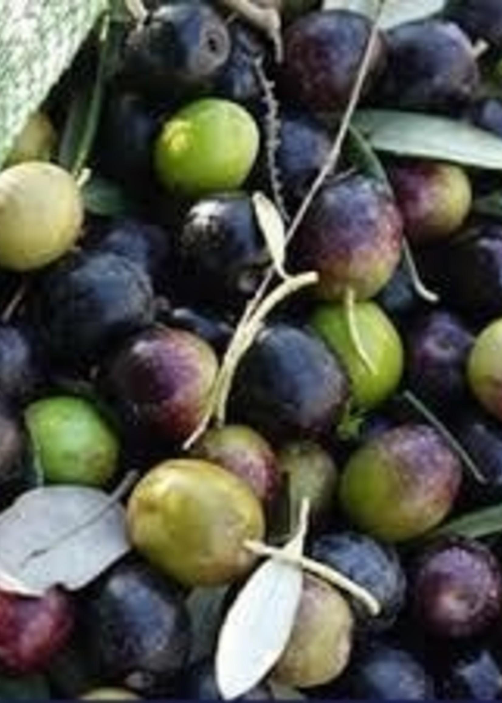 """Olive Us """"Melgarejo"""" Hojiblanca Robust (Spain) Crush Date: November 2020"""