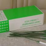 STEPHANOTIS STEMS GREEN 200CT.