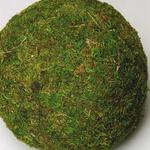 Moss Ball 8'' LARGE, EACH