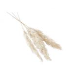 """WHITE 47"""" - 53""""/ Pack of 3 PAMPASS GRASS"""