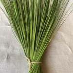 """FOUNTAIN GRASS , GREEN Bunch 12 oz - Packed 20 bunches  length 48-54"""""""