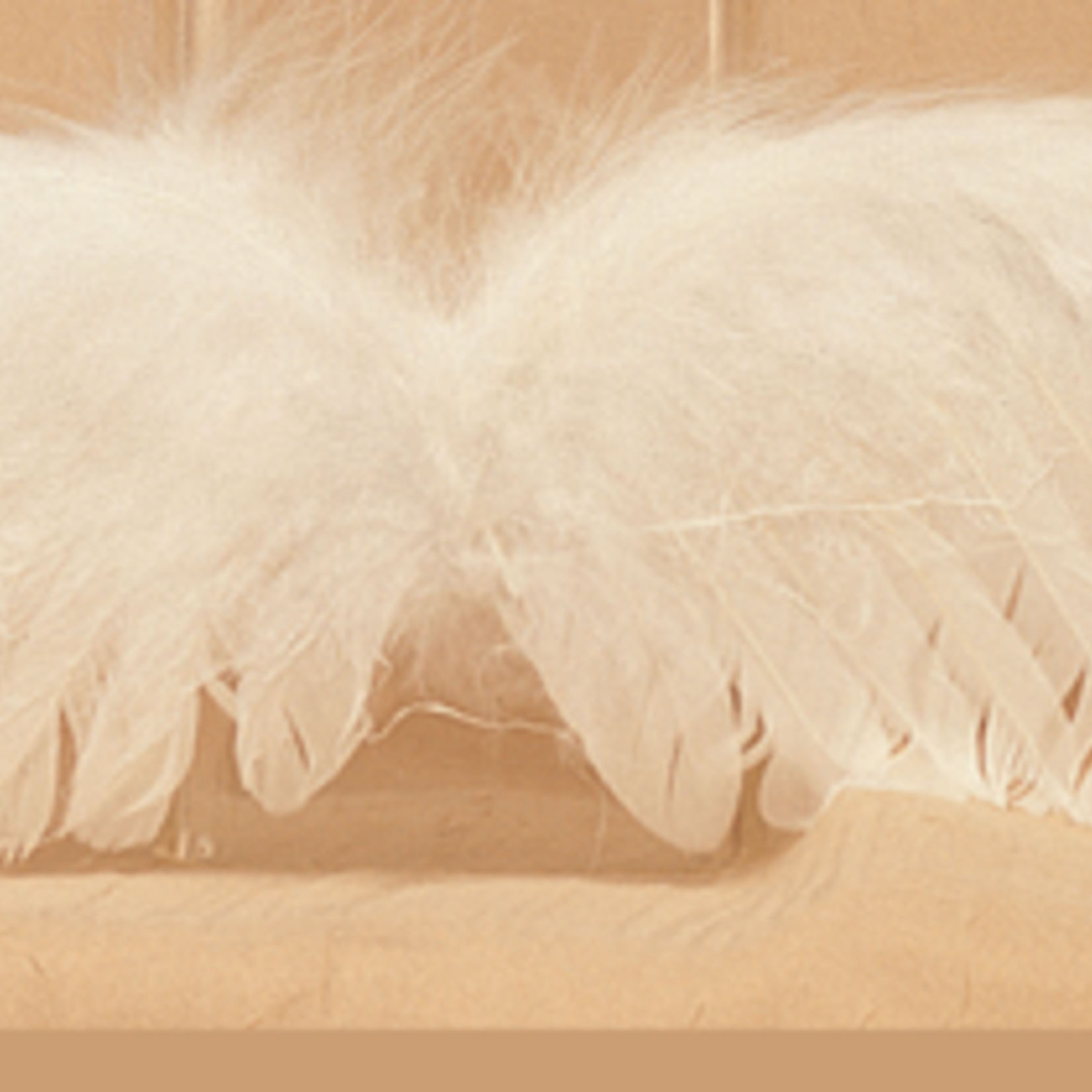 11X3.25'' FEATHER ANGEL WING