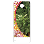 GREEN PLANT CARE TAG
