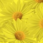DM36 DIPIT yellow/yellow GALLON