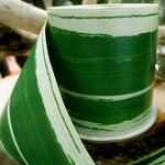 RIBBON LEAF ASPIDISTRA 4.25'' X 50Y GREEN