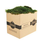 PRESERVED SHEET MOSS 1CUFT BOX