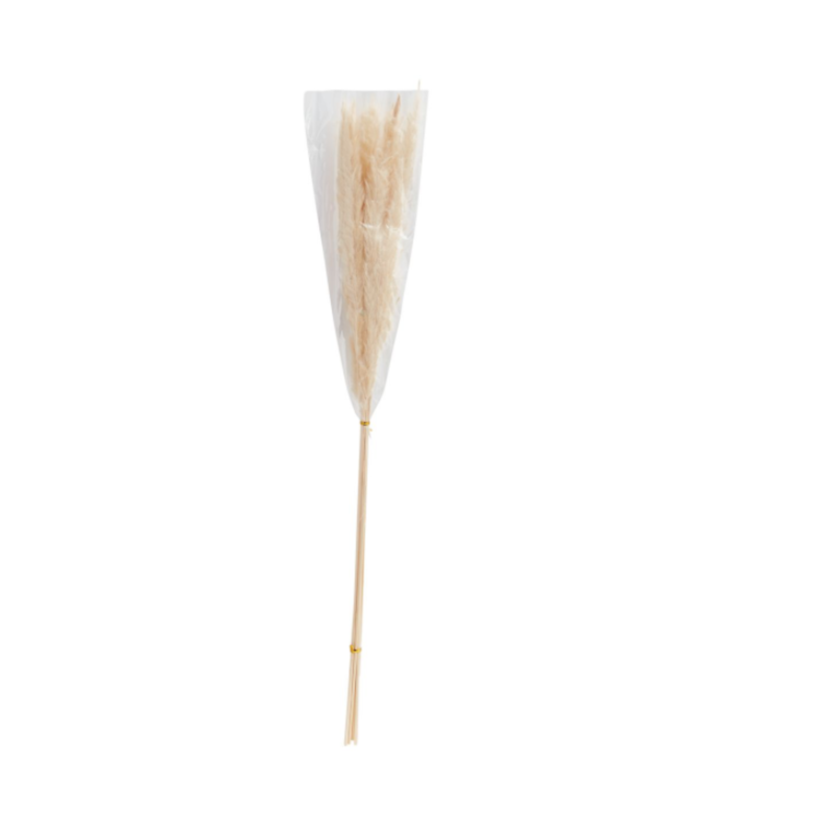 """25.5"""" - 28"""" WHITE PAMPAS GRASS Pack of 6"""