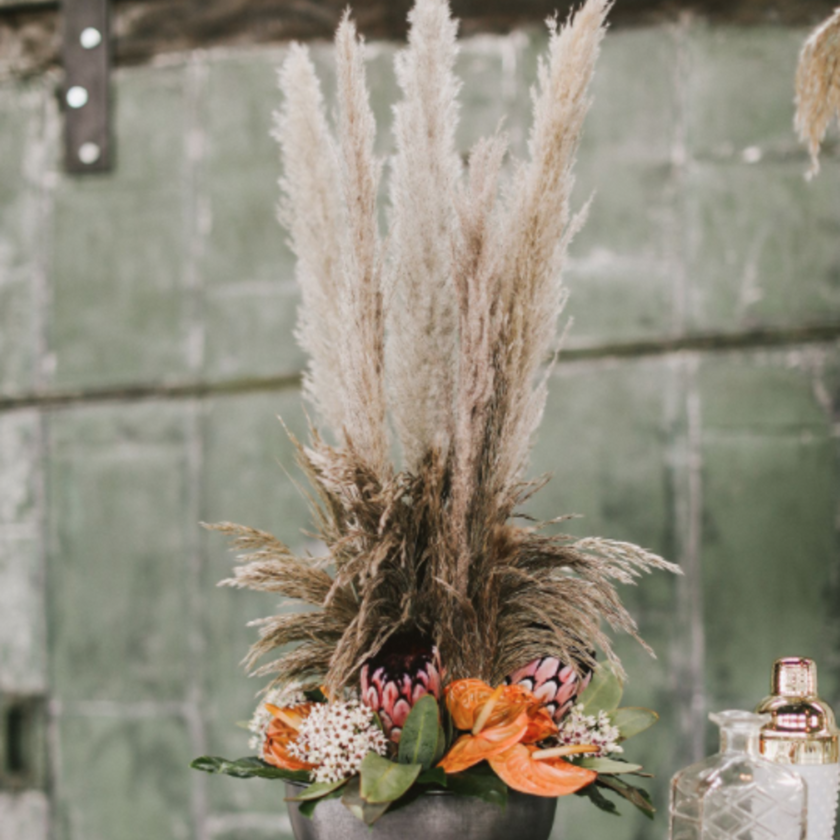 """25.5"""" - 28"""" GREY PAMPAS GRASS Pack of 6"""