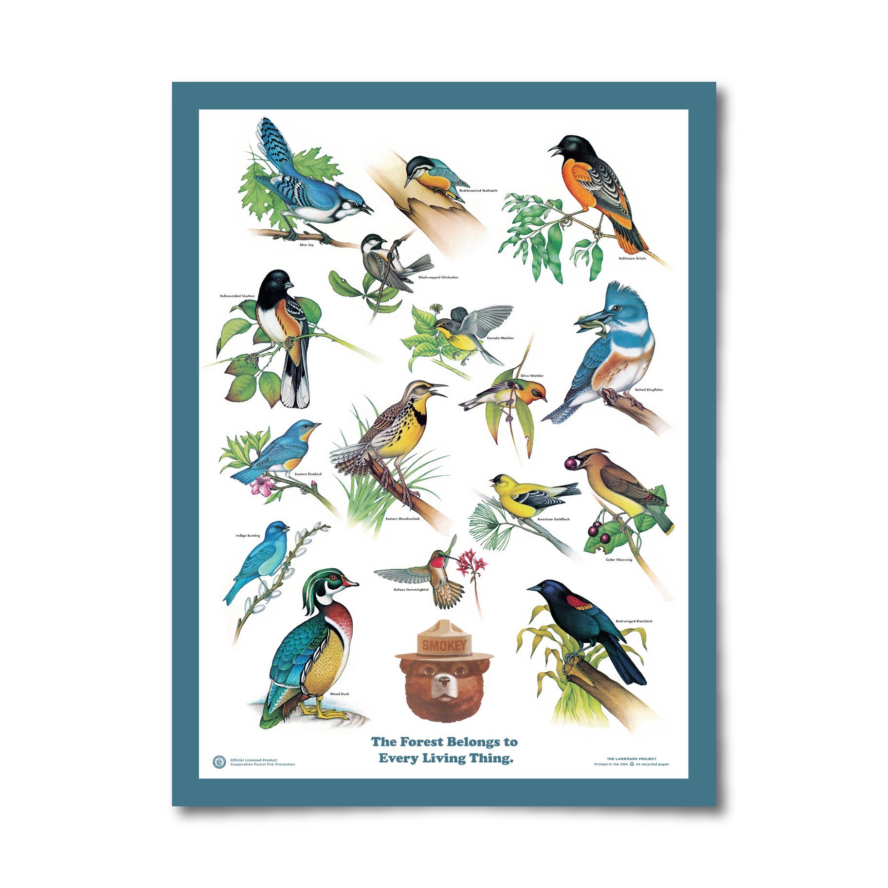 Birds of the Forest Poster