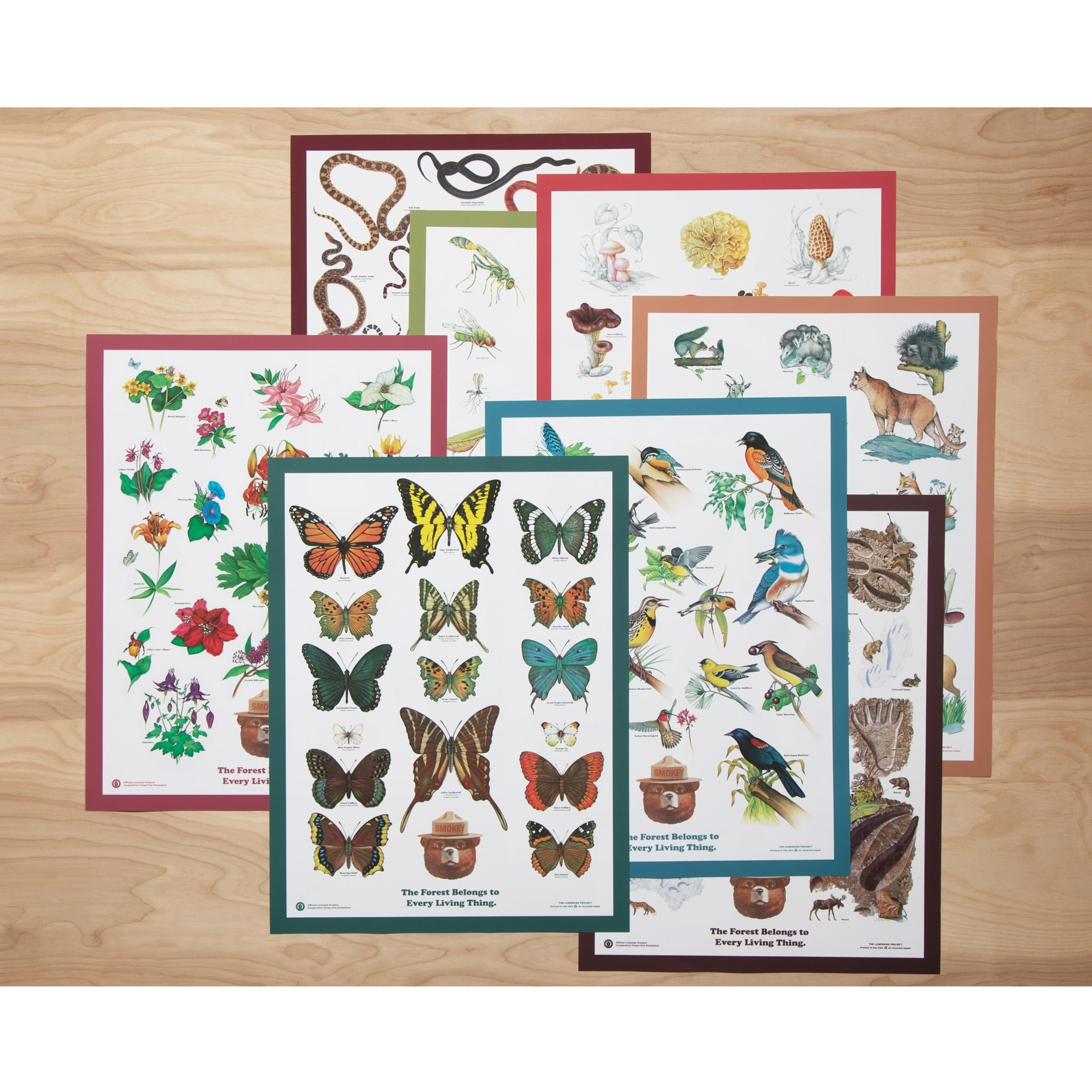 Butterflies of the Forest Poster
