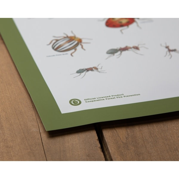 Insects of the Forest Poster