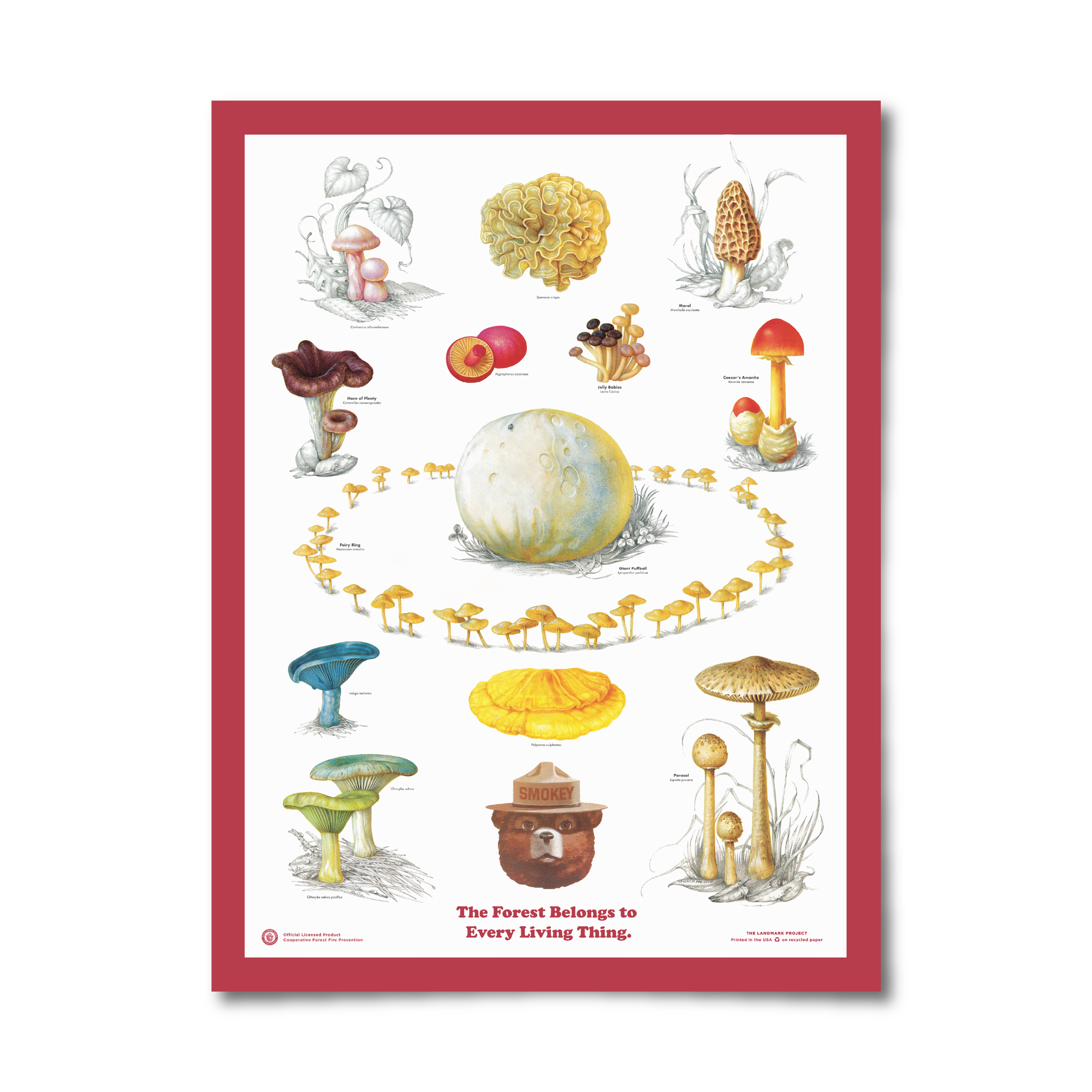 Fungi of the Forest Poster
