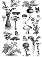 Re-Design with Prima® Fungi Forest Transfers