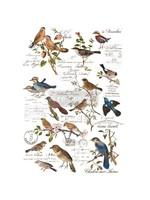 Re-Design with Prima® Postal Birds Transfers