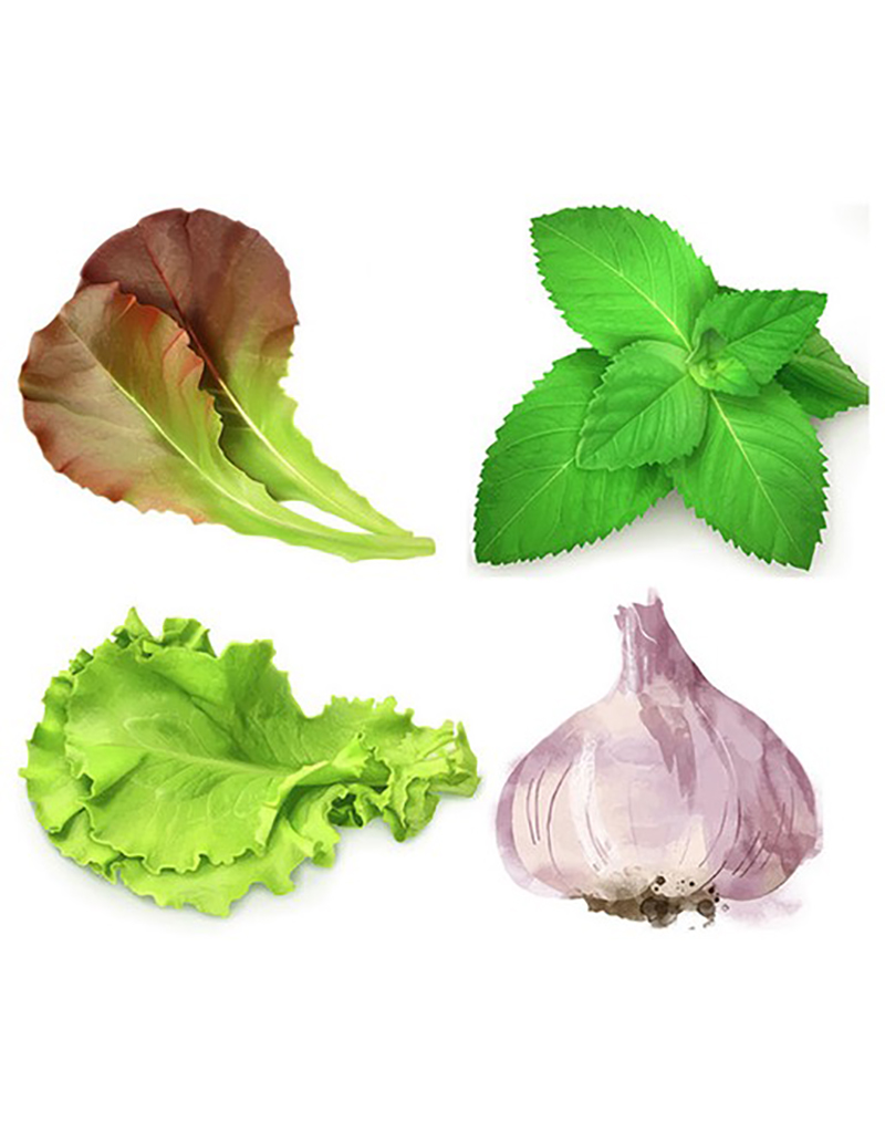 Herbs & Lettuces Tray Liners, pack of 20 pcs
