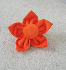 Hot Dog Flower - Orange - Medium