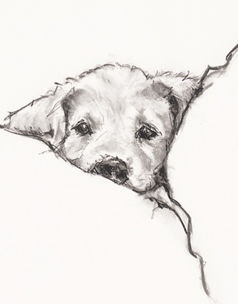 Calaisio Dog in Bed Get Well Card