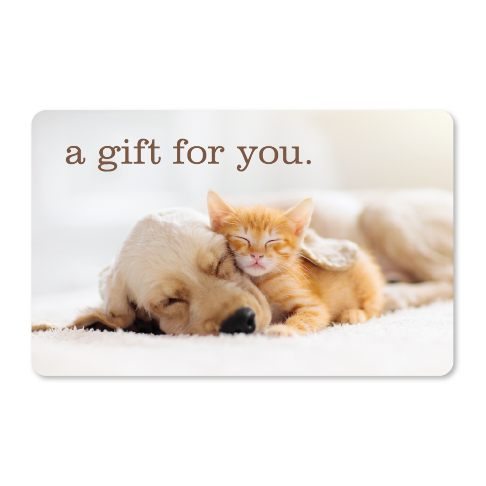 Gift Cards - Cuddle