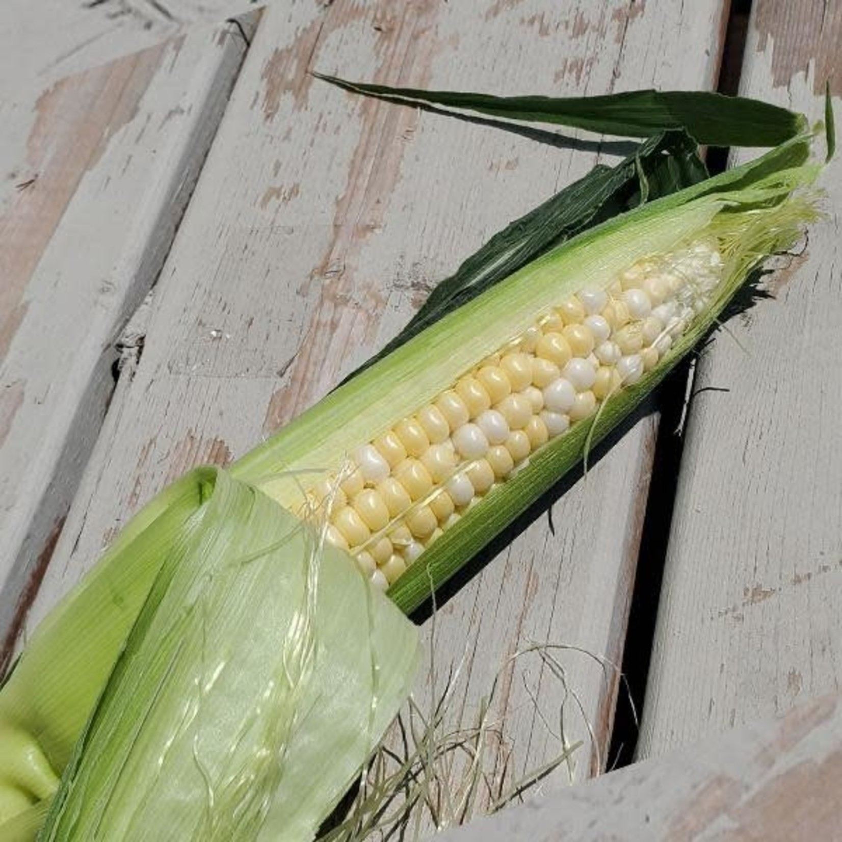 1 maïs ( 2 couleurs)