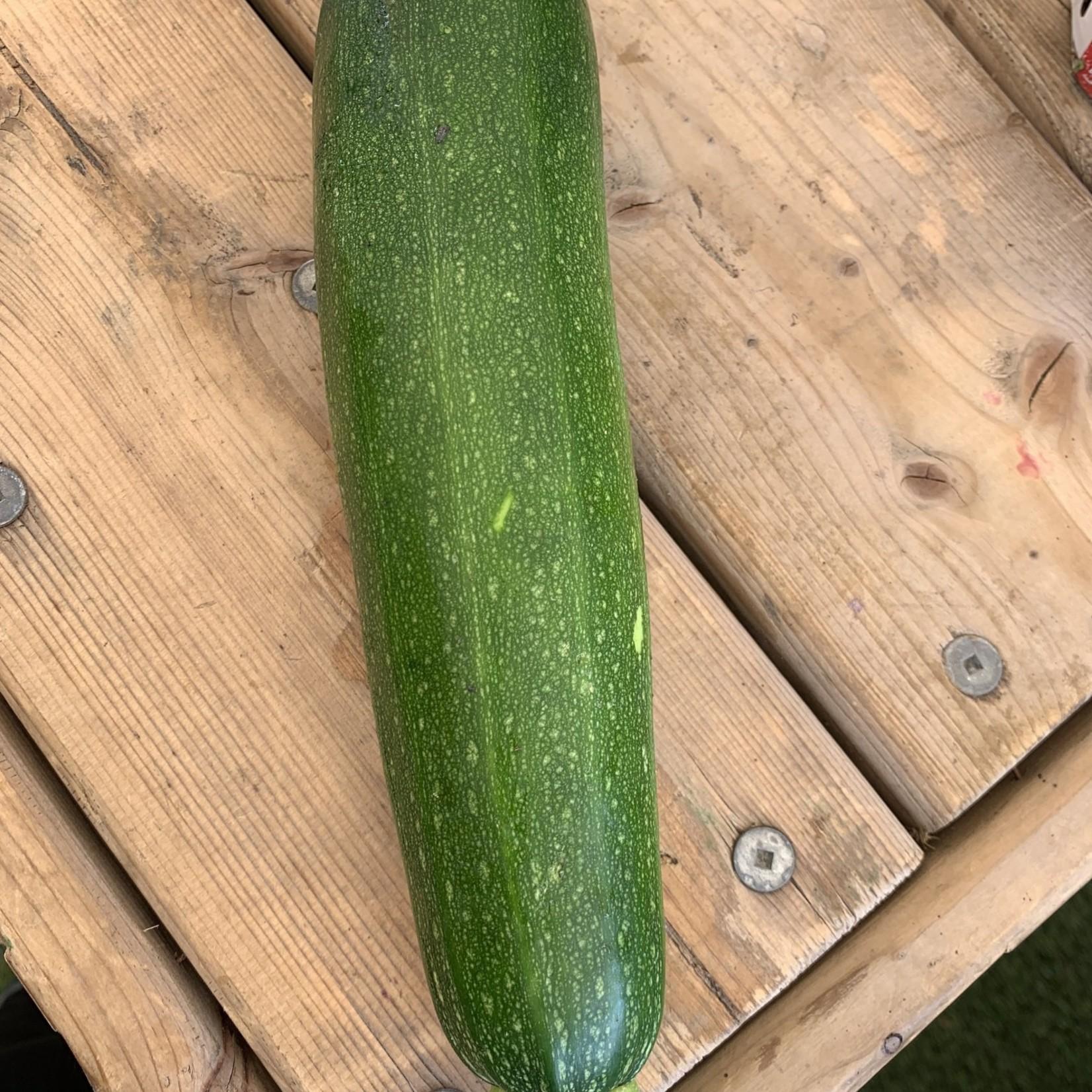 Zucchinis vert