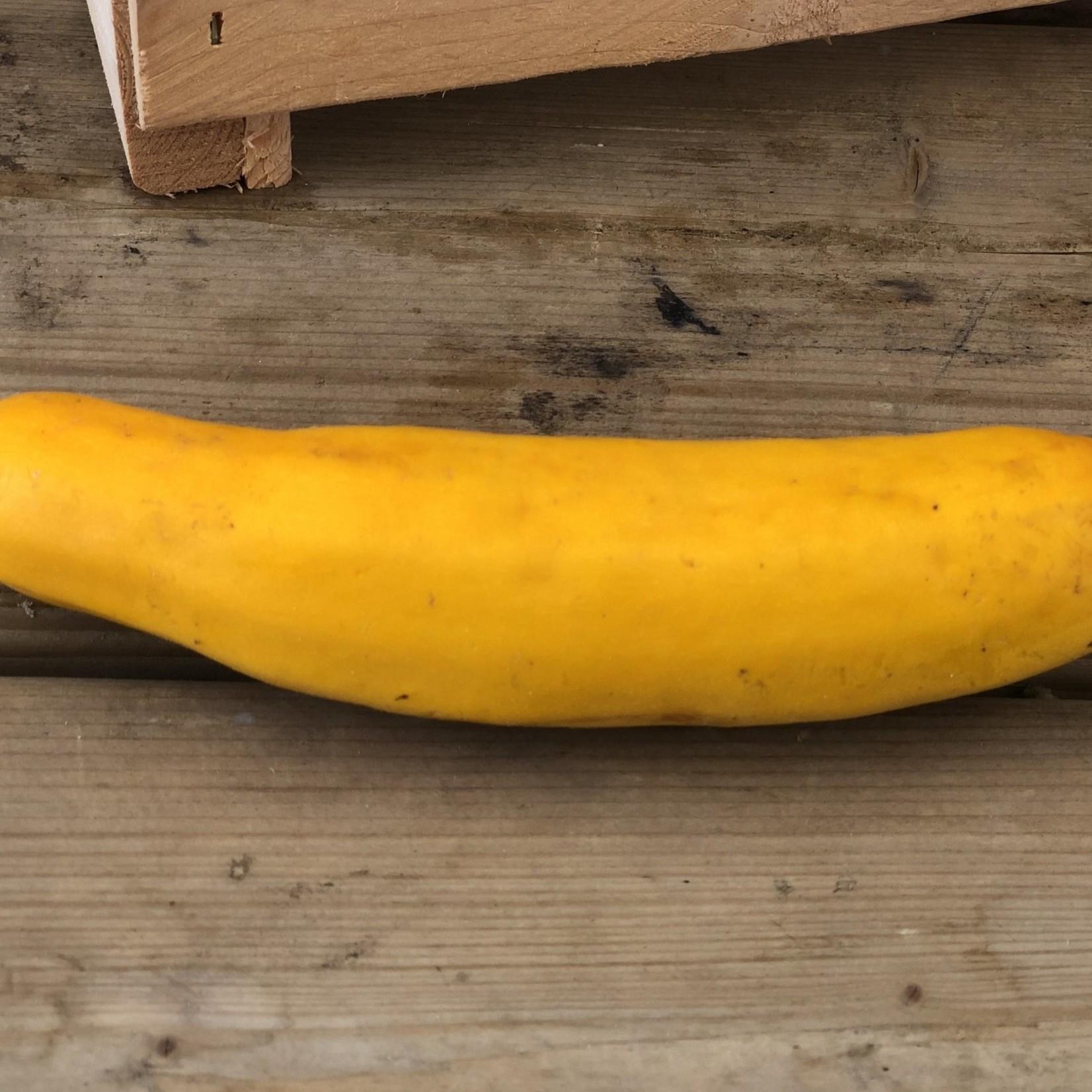 Zucchinis jaunes