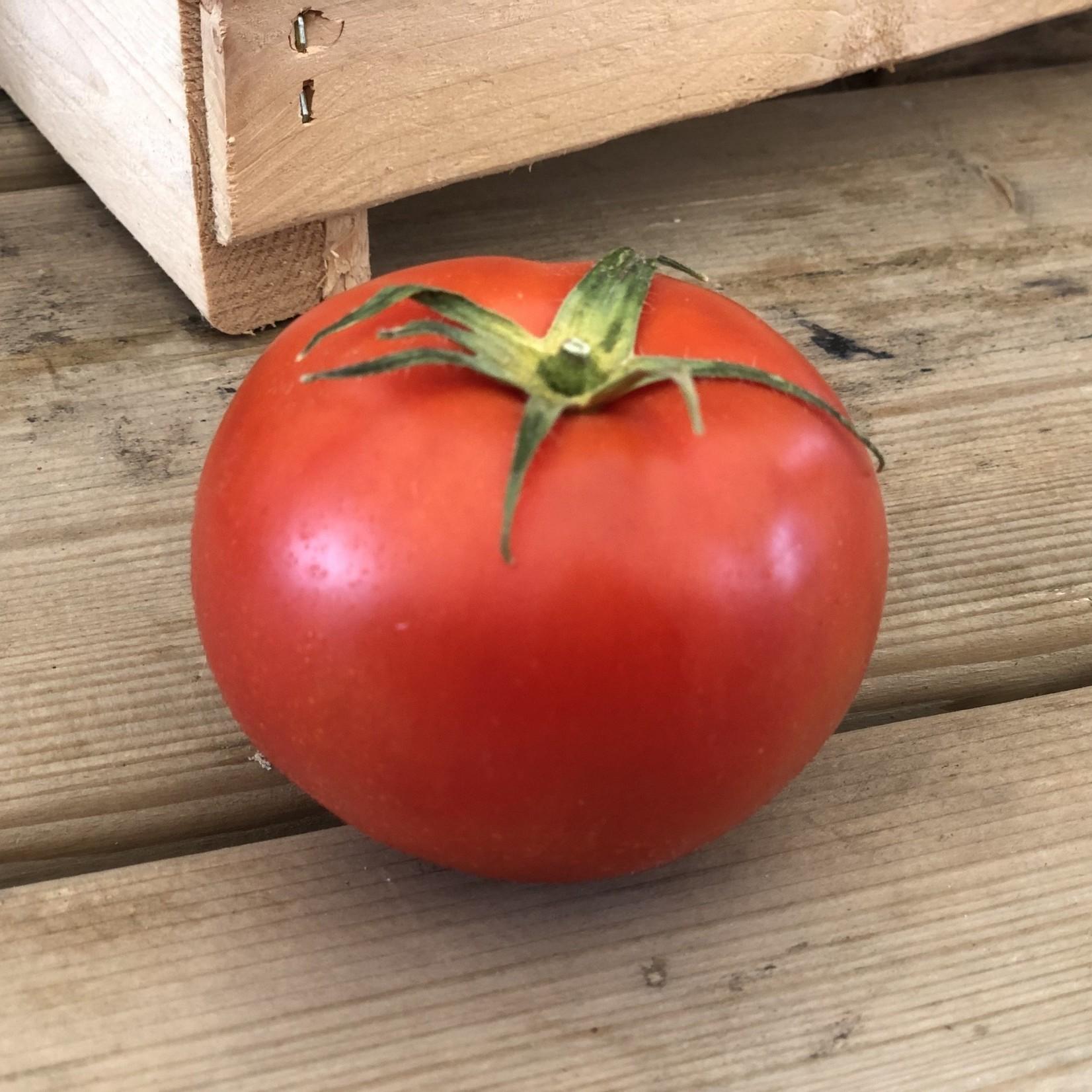 Tomates de Champs (unité)