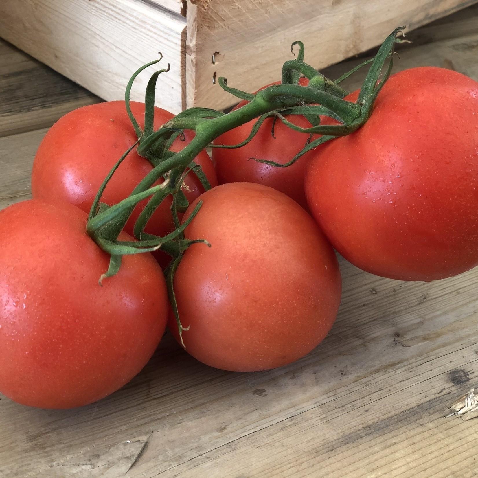 Tomate de champs (panier)