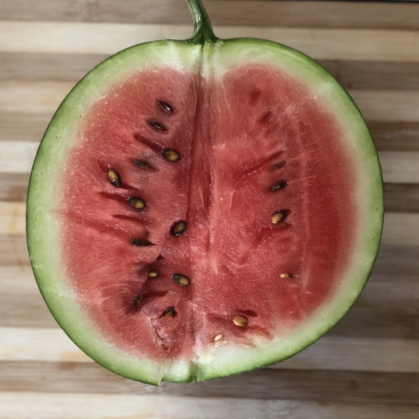 Melon d'eau à Chair Rouge (P)